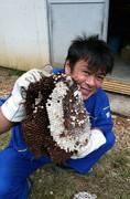 蜂の巣駆除の様子1