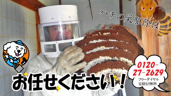 ハチの巣駆除タイトル画像